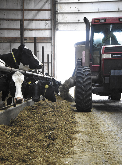 (Right) Marc Clasemann conveys feed to the milking cows the morning of Nov. 15.  PHOTO BY ANDREA BORGERDING