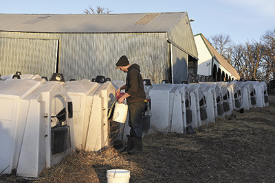 (Right) Marc Clasemann feeds calves the afternoon of Nov. 15. PHOTO BY MARK KLAPHAKE
